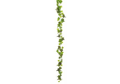 Klimop (1,9 meter)