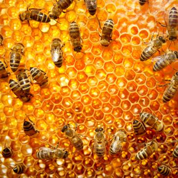 Honing helpt bij kinderen tegen hoesten
