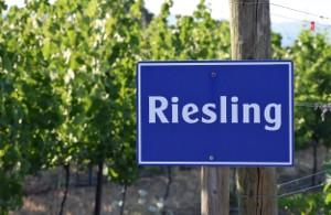 Riesling – een nobele kameleon onder de druiven