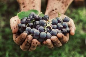 Wat zijn tannines in wijn?