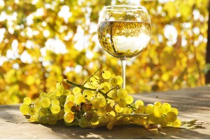 Chardonnay – de wereldkampioen van de witte wijnen