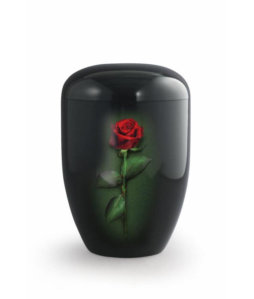 Rode roos zwart - bio