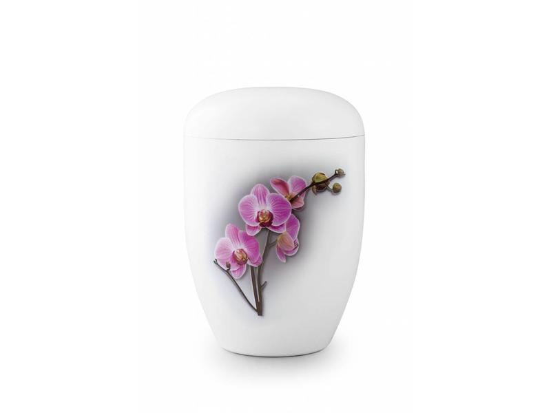 Eco urn wit orchidee - bio