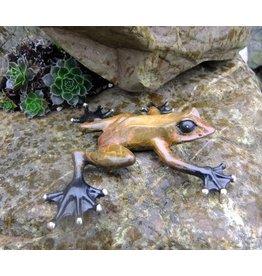 Eliassen Bild Bronze Regenwald Frosch
