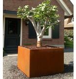 Adezz Corten-Stahl Anden Pflanzer