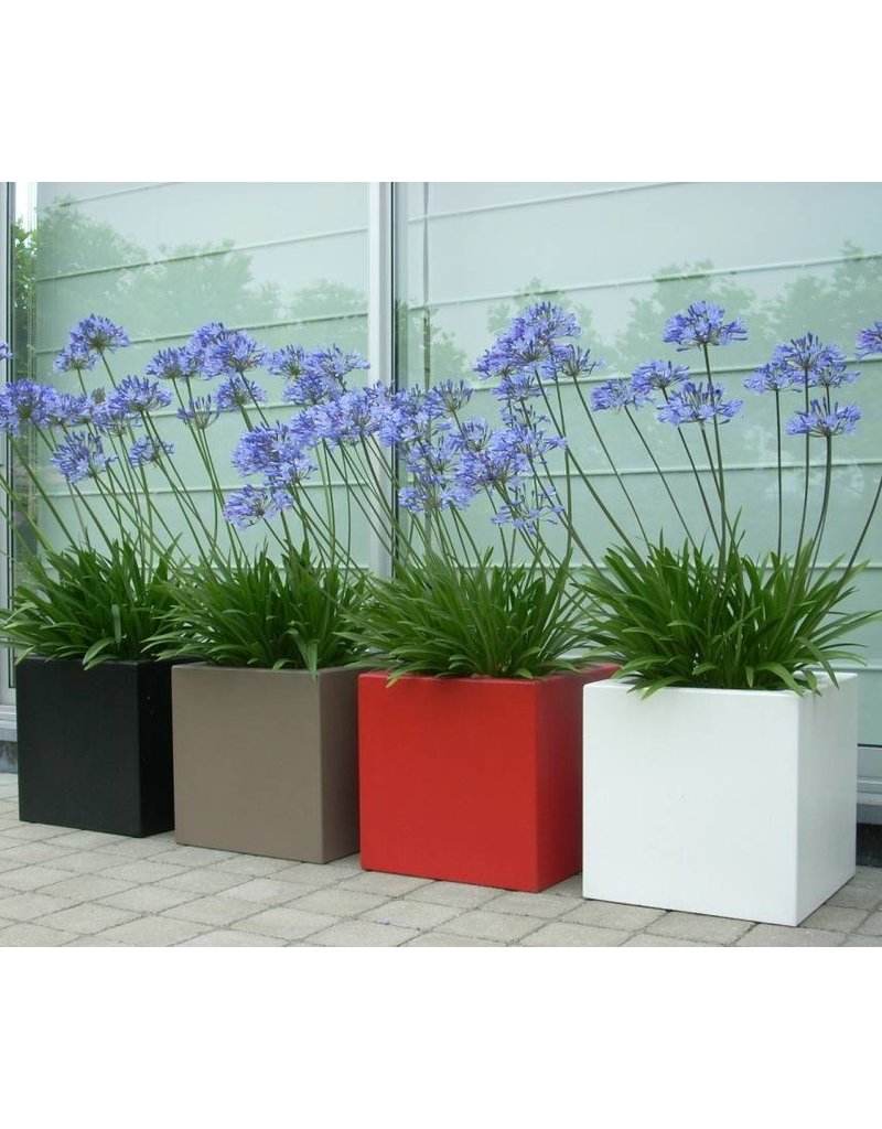 Adezz Pflanzer Polyestermatte boxwood adezz