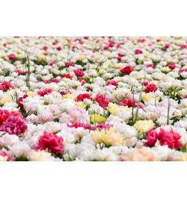 Tuinschilderij 60x90cm Tops