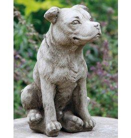 dragonstone Staffordshire-Bullterrier-Hund