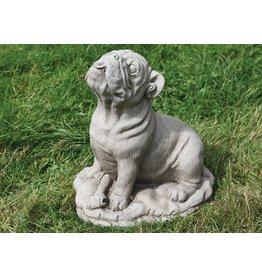 dragonstone große Bulldog