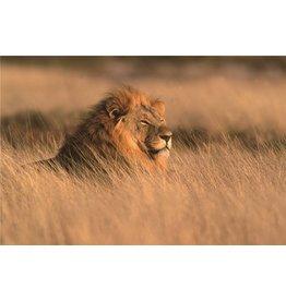 Glasmalerei 80x120cm Safari