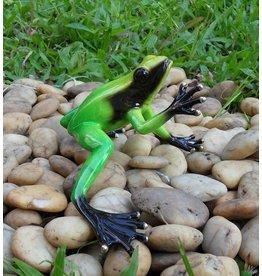 Regenwald Frosch grün