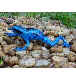 Regenwald Frosch blau