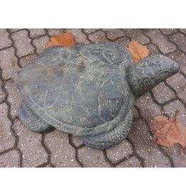 Zeeschildpad groot