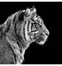 Fotoschilderij 80x80cm Tiger1