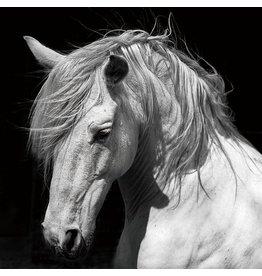Eliassen Glasmalerei 120x120cm Pferd
