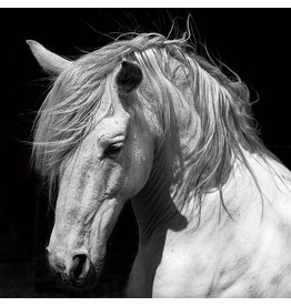 Glasschilderij 120x120cm Paard