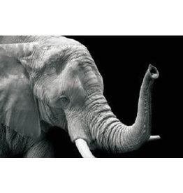 Eliassen Glasmalerei 50x70cm Elephant3
