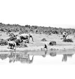 Glasschilderij 80x120cm Kudde olifanten 1