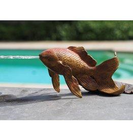 Goldfisch Bronze