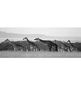 Glas schilderij 60x160cm Giraffen