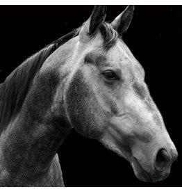 Glasmalerei 80x80cm Pferd