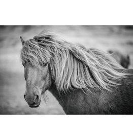 Schilderij glas 60x90cm Pony
