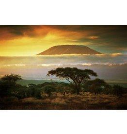 Schilderij glas 80x120cm Afrika
