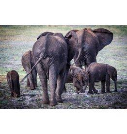 Acrylmalerei 80x120cm Elefanten