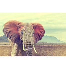 MondiArt Glasmalerei Elefant groß 80x120cm