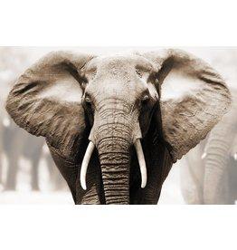 MondiArt Glasmalerei Elefant Kopf 80x120cm