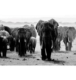 MondiArt Glasmalerei Große Herde von Elefanten 80x120cm