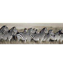 MondiArt Glasmalerei Gruppe Zebras 50x150cm
