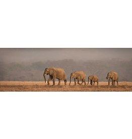 MondiArt Glasscchilderij rechteckiger Olifanten 50x150cm