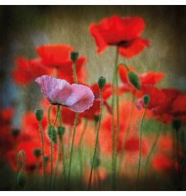 MondiArt Glasmalerei Poppies 80x80cm