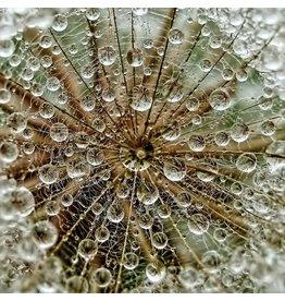 MondiArt Glasschilderij Dauw 80x80cm