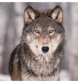 Acrylmalerei Wolf 120x120cm