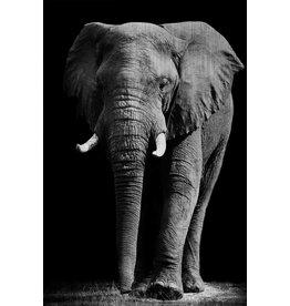 MondiArt Dibond Malerei Elefant groß 80x120cm