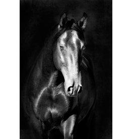 MondiArt Dibond Gemälde Horse1 80x120cm