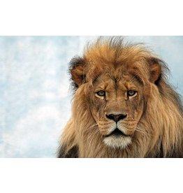MondiArt Dibond schilderij  Heer en meester  80x120cm