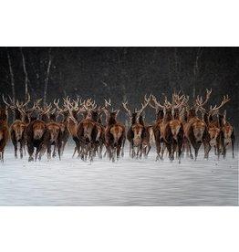 MondiArt Aluminium Malerei Deer 80x120cm