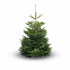Nordmann Original Nordmann kerstboom 150 cm