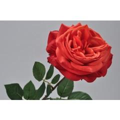 Silk-ka Roos met blad rood/oranje