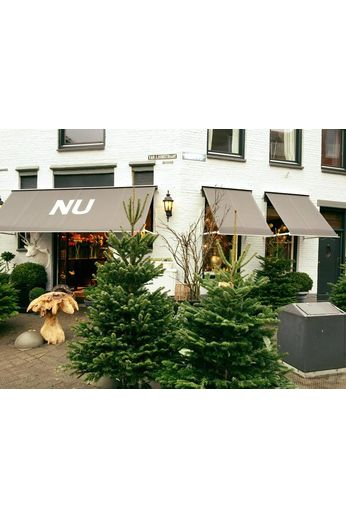 Nordmann kerstboom 250 cm