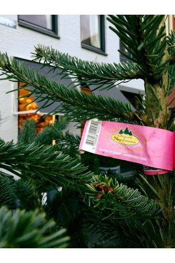 Nordmann Original Nordmann Christmas tree 200cm