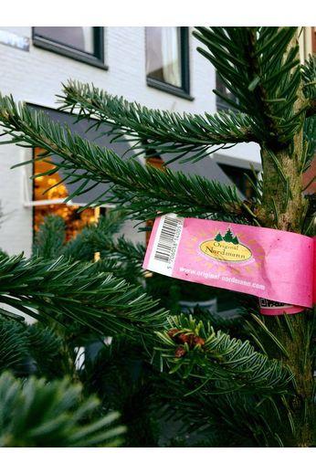 Nordmann kerstboom 150 cm
