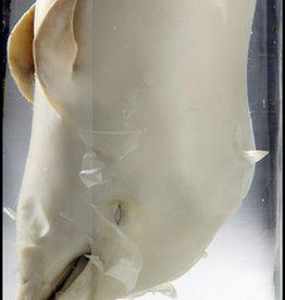 Foam Editions Hans van den Bogaard - Foetus van dolfijn, 2010