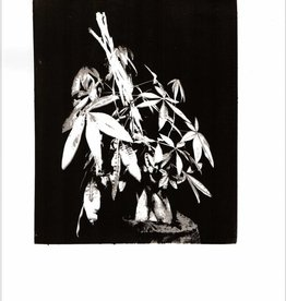 Foam Editions Jaya Pelupessy & Felix van Dam - Traces of the Familiar