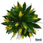 Boeket tulpen geel