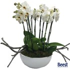 Schaal met orchideeën