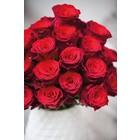 Rode roos Rhodos per stuk